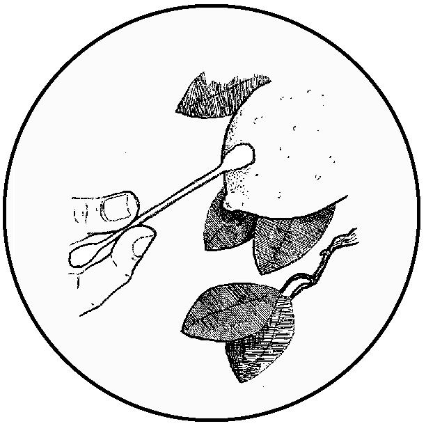 Wild Yeast Swab (icon)