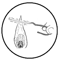 Isolating Yeast - Streaking (icon)